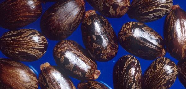 If it was the first I'd ever saw the beans, I'd try to eat em too. =x